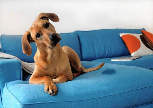 Capa - Qual o melhor tecido para quem tem animais em casa?