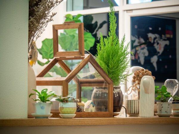Capa - Guia completo para escolher as melhores plantas na decoração!