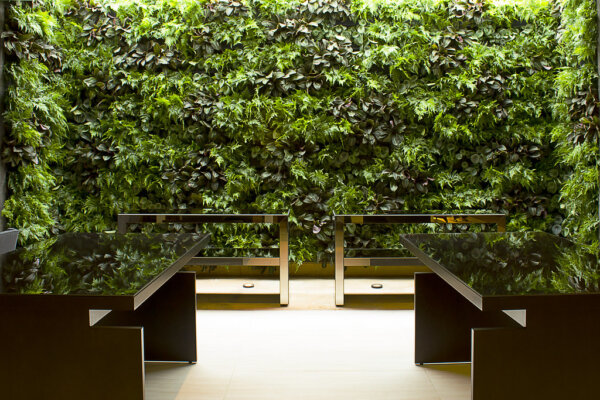 Capa - Jardim Vertical: Por que ter um, como fazer e dicas incríveis