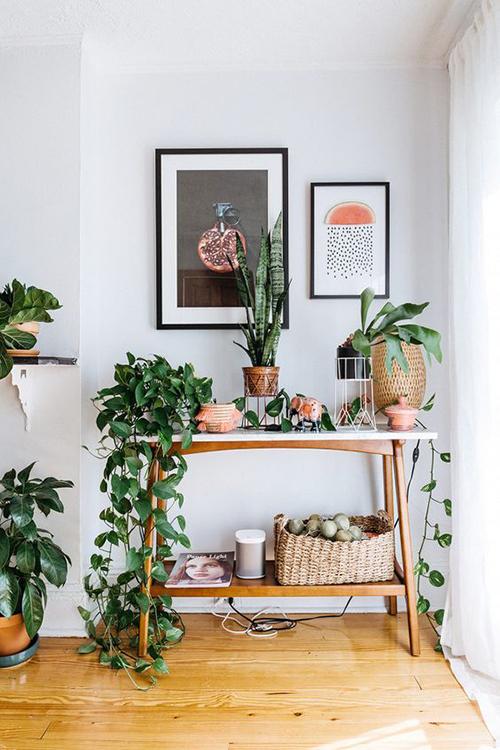 decorar uma apartamento alugado - folhagens para apartamento