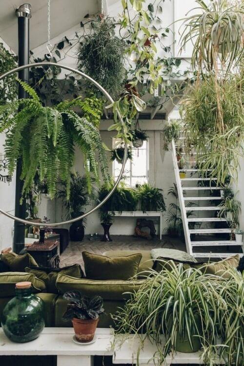 Decorar com amor - uma floresta dentro de casa