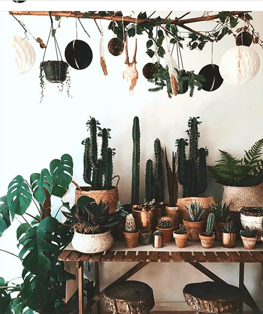 Novo boho chic - abuse das plantas